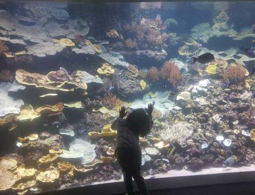 Pariz za decu – akvarijum
