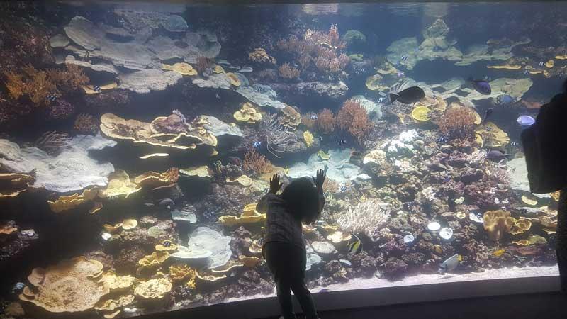 Pariz za decu - akvarijum