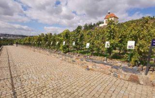 Prag, Trojski vinogradi